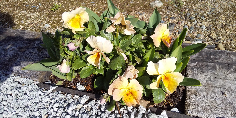ぴーちぇすハウスの花壇